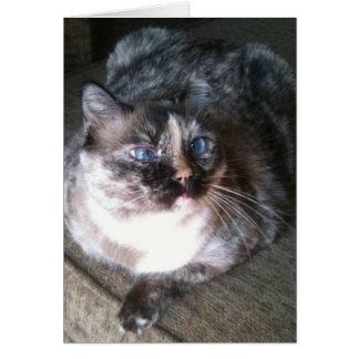 Belle carte de note de chat