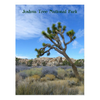 Belle carte postale d'arbre de Joshua !