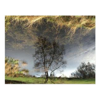 Belle carte postale d'arbre de photographie de