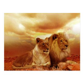 Belle carte postale de couples de lion