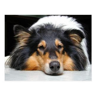 Belle carte postale de portrait de nez de chien de