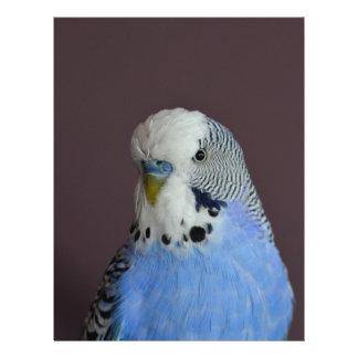 Belle perruche bleue prospectus 21,6 cm x 24,94 cm