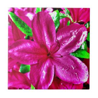 Belle tuile florale rose d'azalée carreau