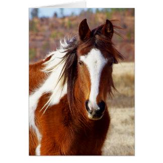 Belles cartes d'anniversaire de cheval de peinture