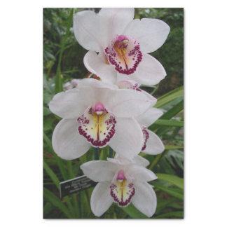 Belles fleurs tropicales d'orchidées blanches papier mousseline