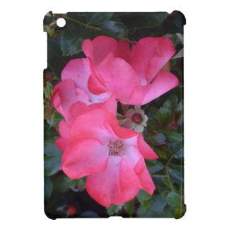 Belles vieilles, roses roses anglaises étuis iPad mini