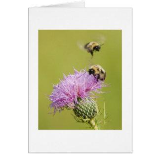 Bezige Bijen Briefkaarten 0