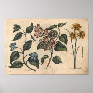 Bigorneau botanique d'impression d'art de la fleur