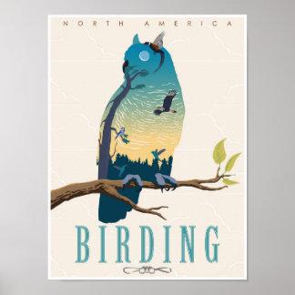 Birding en Amérique du Nord