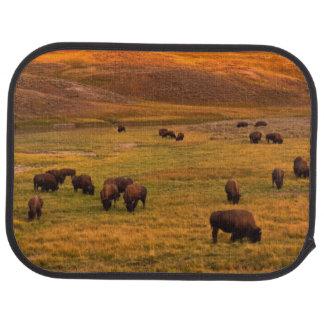 Bison frôlant sur la colline à la vallée de Hayden Tapis De Voiture