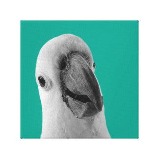 Blanc animal tropical de noir de photo de toiles