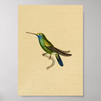 Bleu 1830 de jaune d'impression de colibri de cru poster