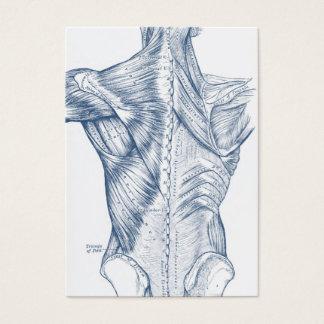 Bleu médical vintage de muscles du dos de dessin cartes de visite
