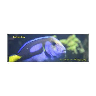 bleu Tang de photo de toile enveloppé par
