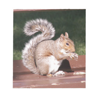 Bloc-note écureuil