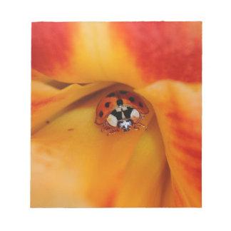Bloc-note Ladybird