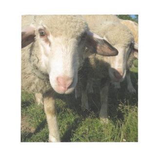 Bloc-note Moutons curieux
