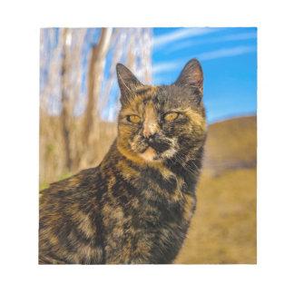 Bloc-note Séance et observation sauvages adultes de chat