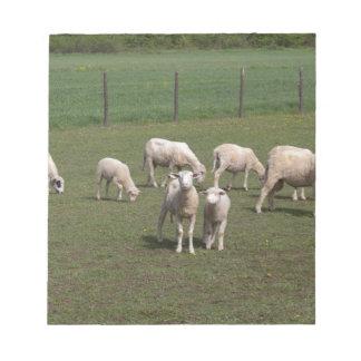 Bloc-note Troupeau de moutons