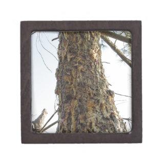 Boîte À Babioles De Première Qualité Résine de pin sur le tronc