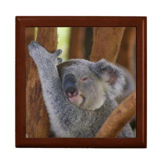 Boîte À Souvenirs Boîte-cadeau d'ours de koala