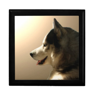 Boîte À Souvenirs Boîtes de chien enrouées de traîneau de chien de