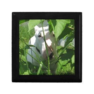 Boîte À Souvenirs Bull-terrier anglais jetant un coup d'oeil par le