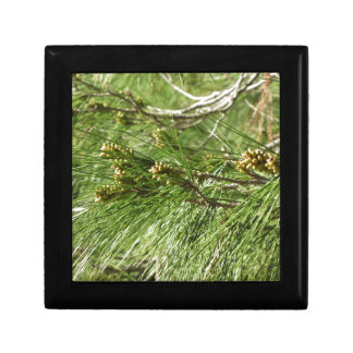 Boîte À Souvenirs Cônes non mûrs de mâle ou de pollen de pin