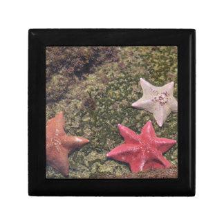 Boîte À Souvenirs Étoiles de mer vivantes (4).JPG
