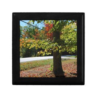 Boîte À Souvenirs Feuille d'automne au Maine