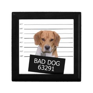 Boîte À Souvenirs Mauvais chien