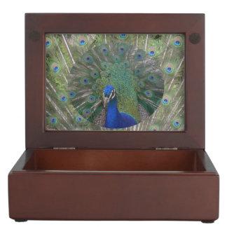 Boîte À Souvenirs Paon avec la boîte de souvenir de plumes