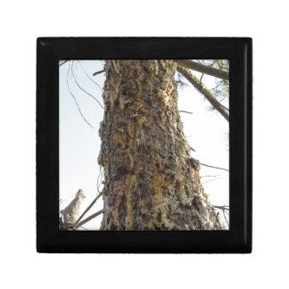 Boîte À Souvenirs Résine de pin sur le tronc
