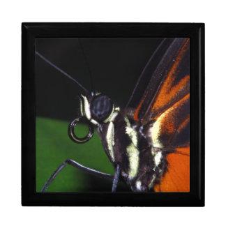 Boîte de souvenir avec la fin de papillon boîtes à bijoux