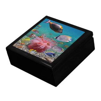 Boîte tropicale de bibelot de poissons boîte à souvenirs