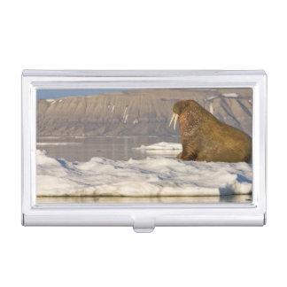 Boîtier Pour Cartes De Visite La Norvège, le Svalbard, île d'Edgeoya, morse