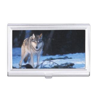 Boîtier Pour Cartes De Visite loup gris, lupus de Canis, dans les collines des 3
