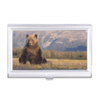 Boîtier Pour Cartes De Visite ours brun, arctos d'Ursus, ours gris, Ursus