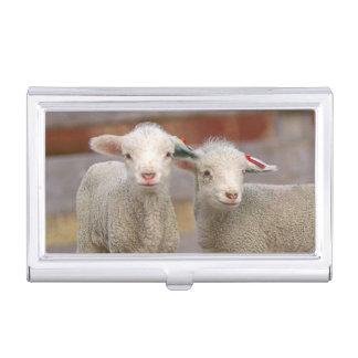Boîtier Pour Cartes De Visite Paires d'agneaux commerciaux de Targhee