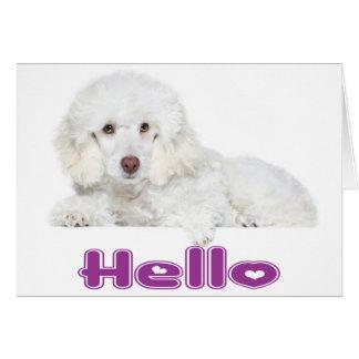 Bonjour carte blanche de chiot de caniche - avec