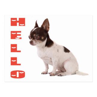 Bonjour carte postale de chiot de chiwawa