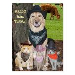 Bonjour du Texas ! Cartes Postales