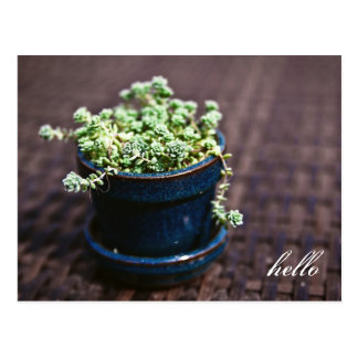 Bonjour mini carte postale de Succulents