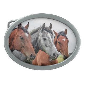 Boucle De Ceinture Ovale Débarras merveilleux de faune de chevaux