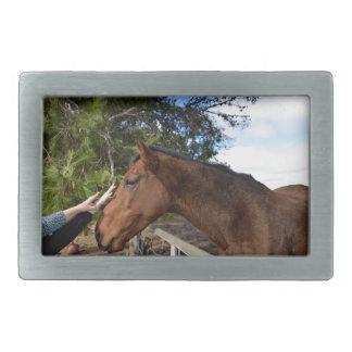 Boucle De Ceinture Rectangulaire Bennie le cheval aimant Pat