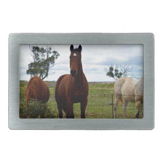 Boucle De Ceinture Rectangulaire Grand cheval magnifique de Brown,