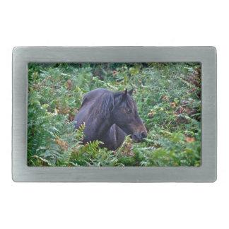 Boucle De Ceinture Rectangulaire Nouveau poney noir rare de forêt - cheval sauvage