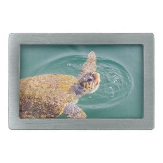 Boucle De Ceinture Rectangulaire Un grand Caretta de tortue de mer de natation