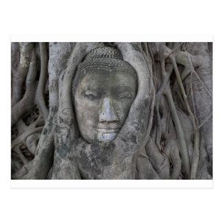 Bouddha dans tree.jpg carte postale