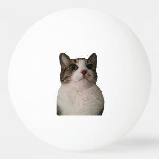 Boule authentique de chat balle tennis de table